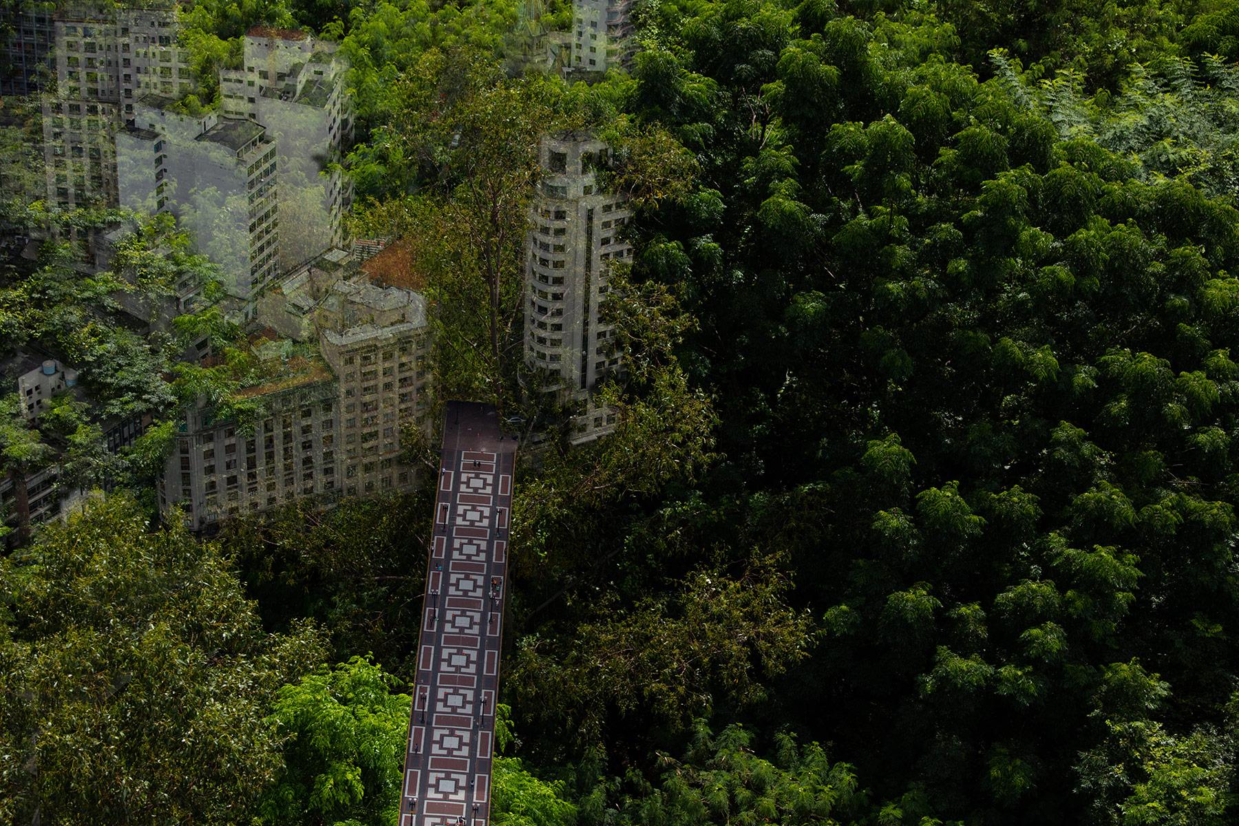 Floresta ou viaduto